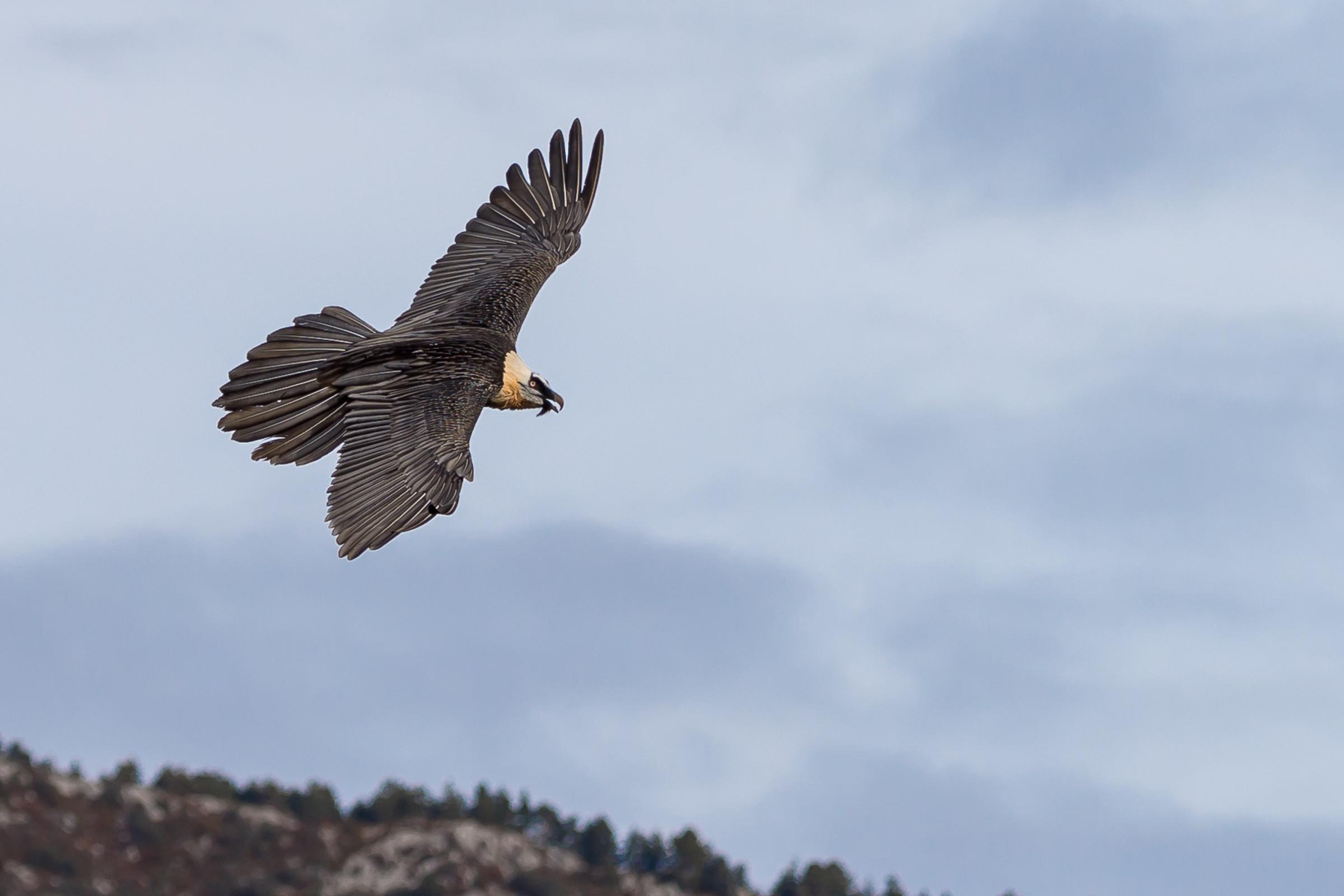 roofvogel gieren 2233