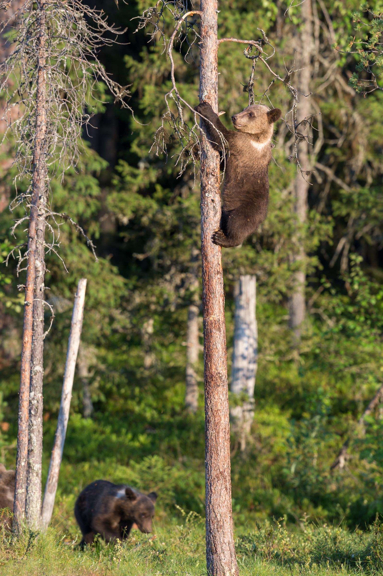 wildlife europa 0158