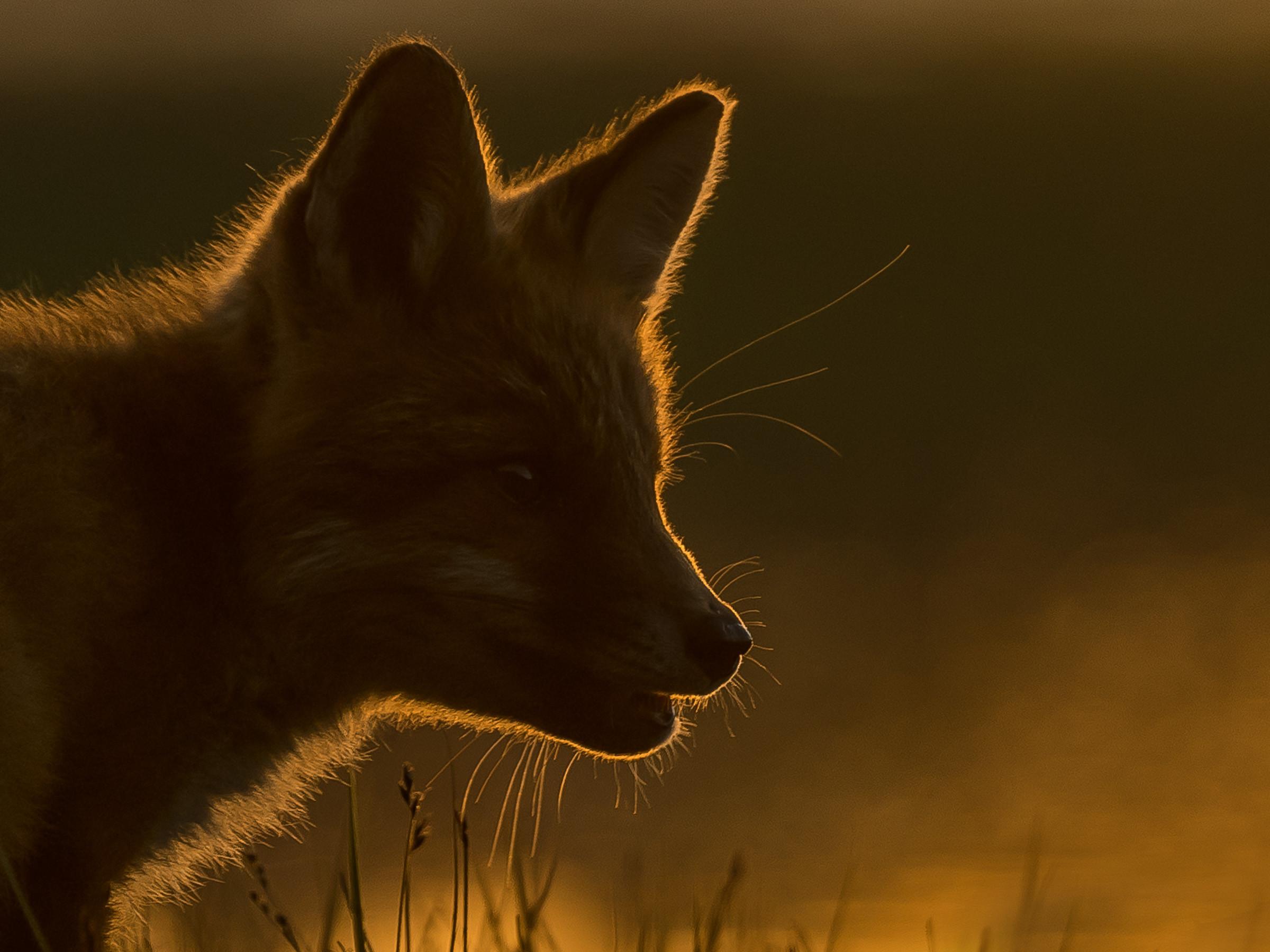 wildlife europa 2926