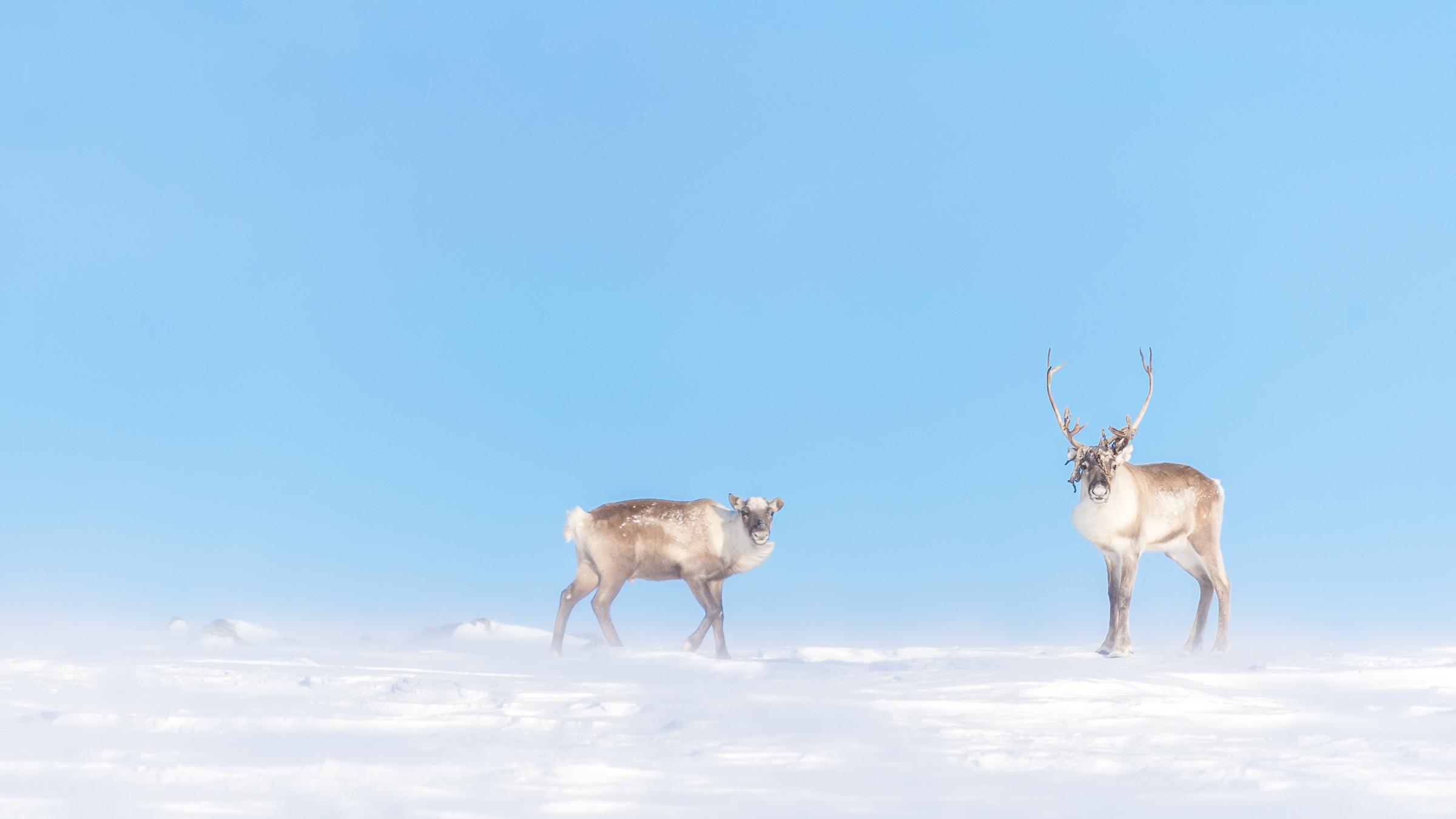wildlife europa 9390