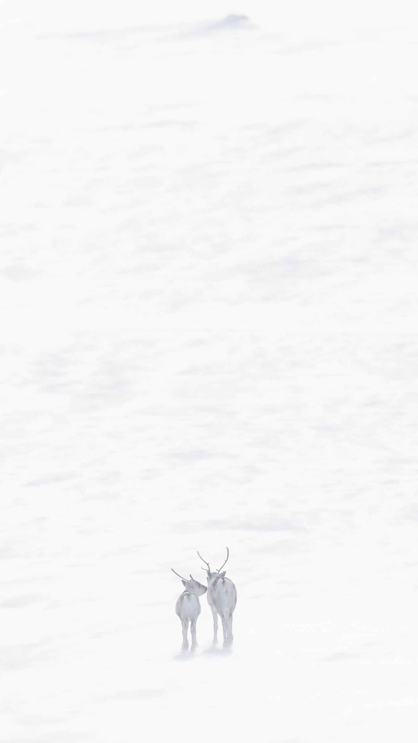 wildlife europa 9535