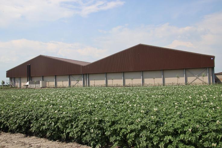 De Geeter, Houtave. Agrobouw. Agrarische gebouwen. opslagloodsen. Stockageloods. Aardappelloodsen. Loodsenbouw, loods bouwen, landbouwloods, hangarbouw, hangar bouwen, nieuwe hangar