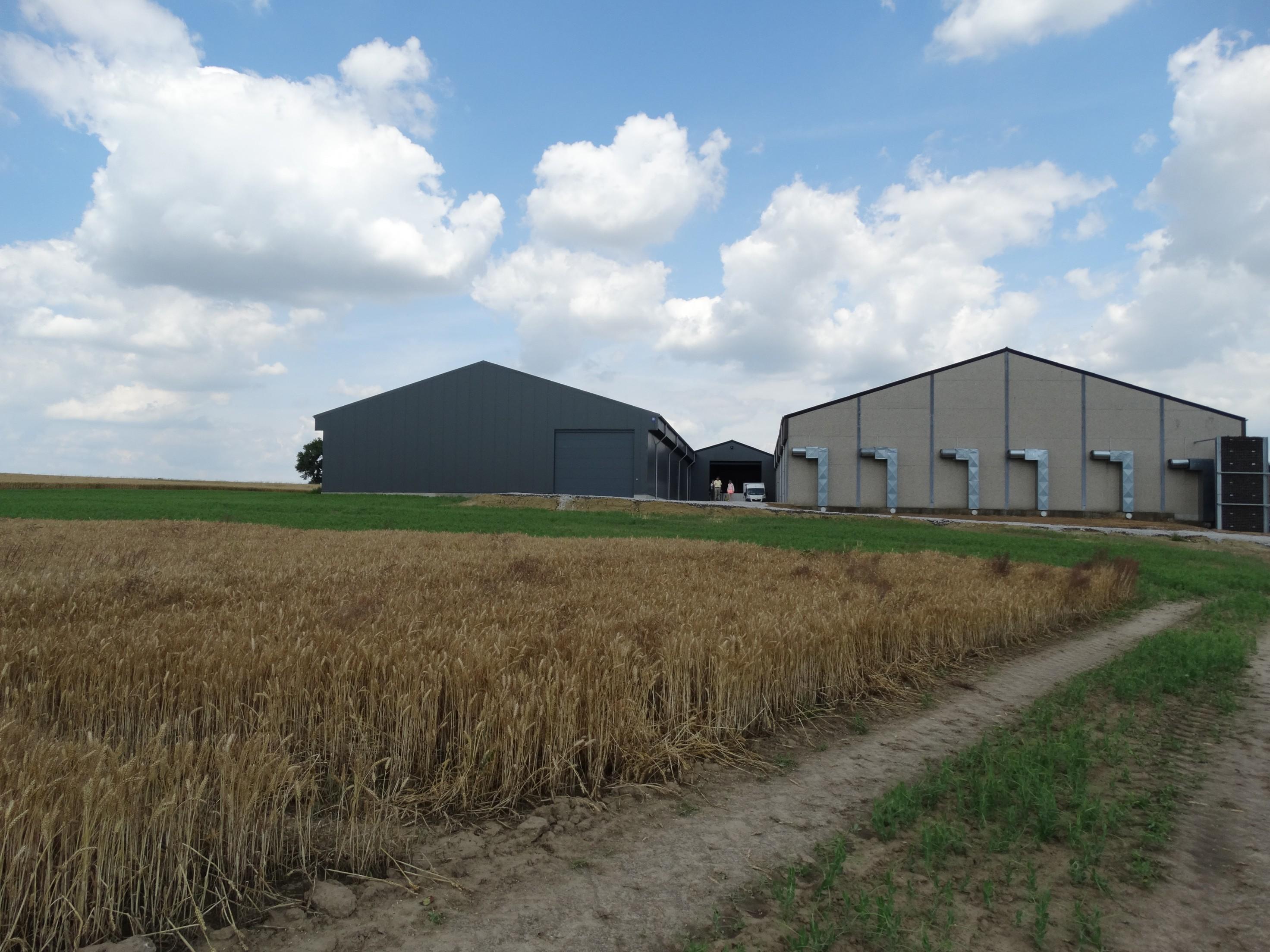 lefevre-Rosseignies-aardappelloods_hangar stockage pommes de terre (26)