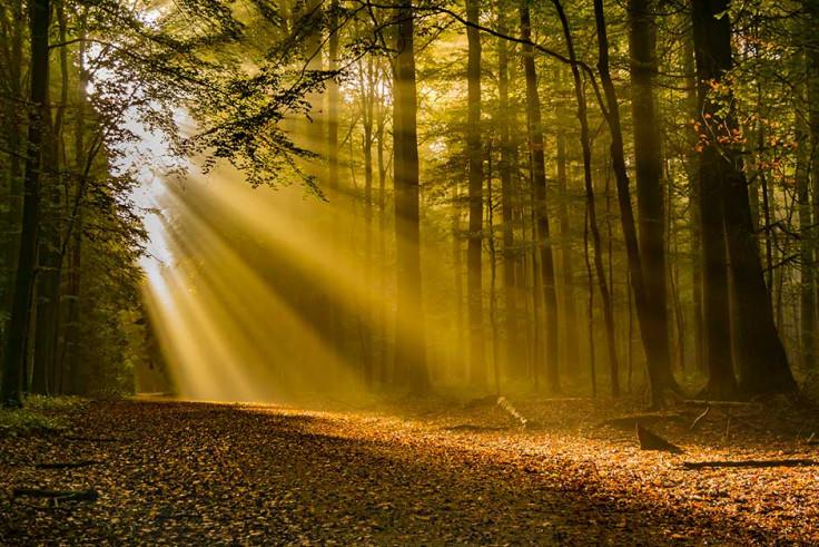 herfst afbeelding