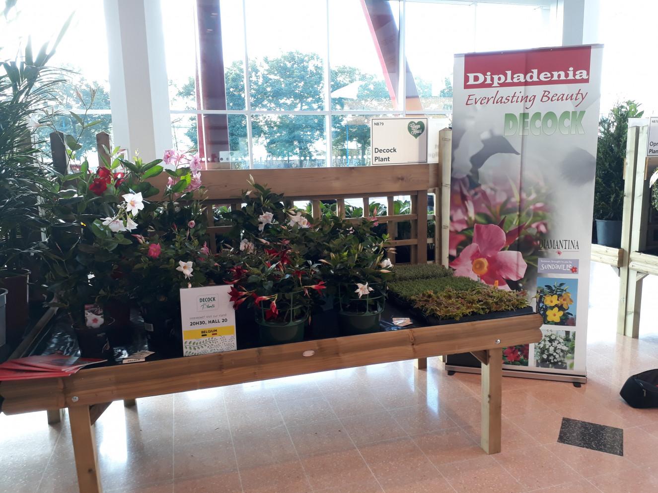 Decock Plants Glee1.jpg