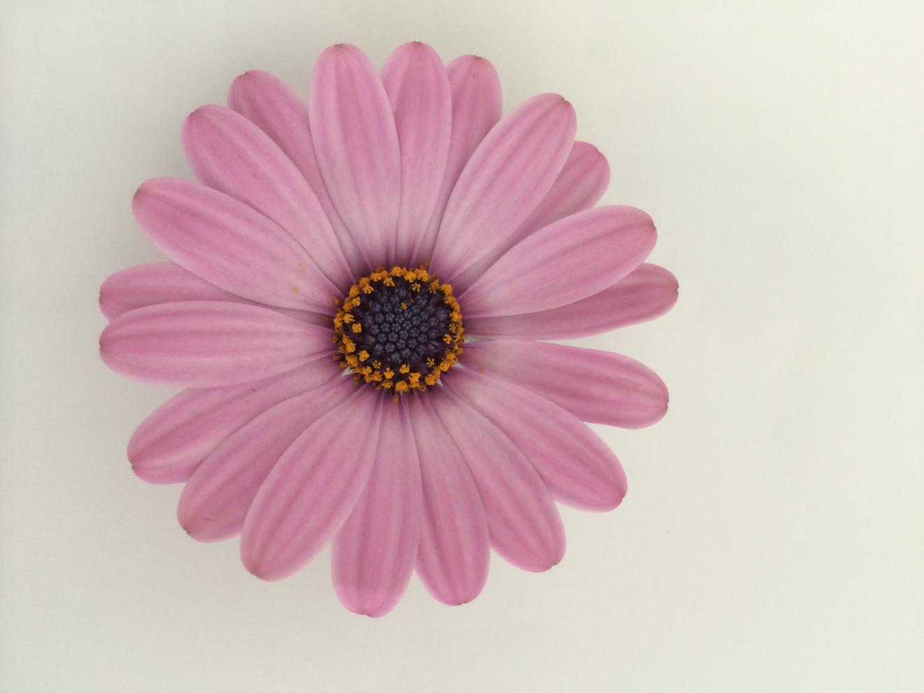 IMG_0091- Pink Cuberdon.jpg
