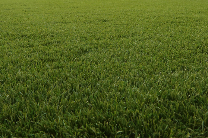 Verda Ludeo | Grasmeester