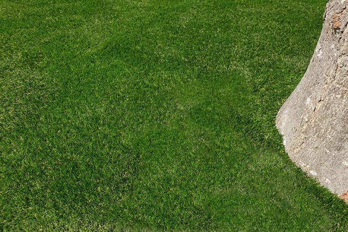 Verda Mallonga | Grasmeester