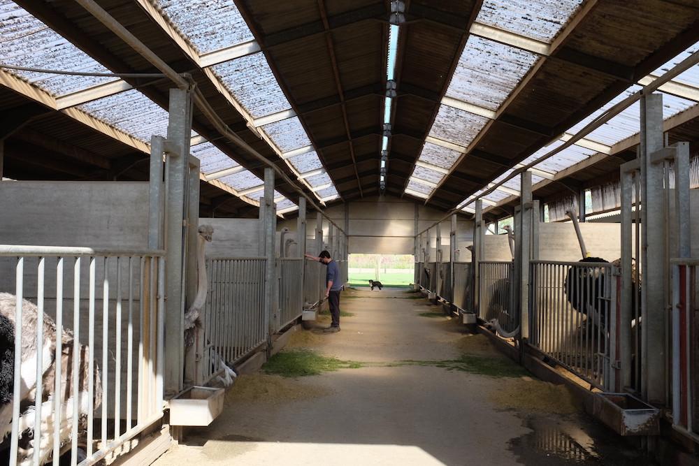 Struisvogelboerderij Schobbejaks Hoogte 1