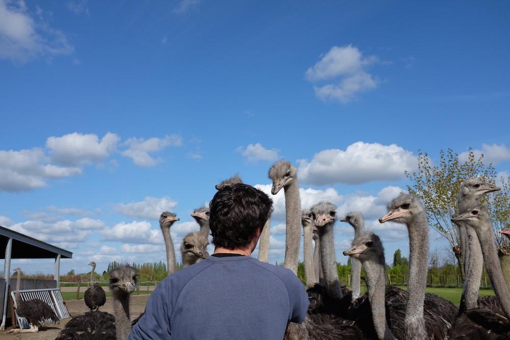 Struisvogelboerderij Schobbejaks Hoogte 6