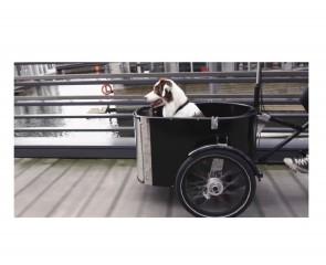 csm_DOG_riding_Copenhagen_nihola_2cf162678a