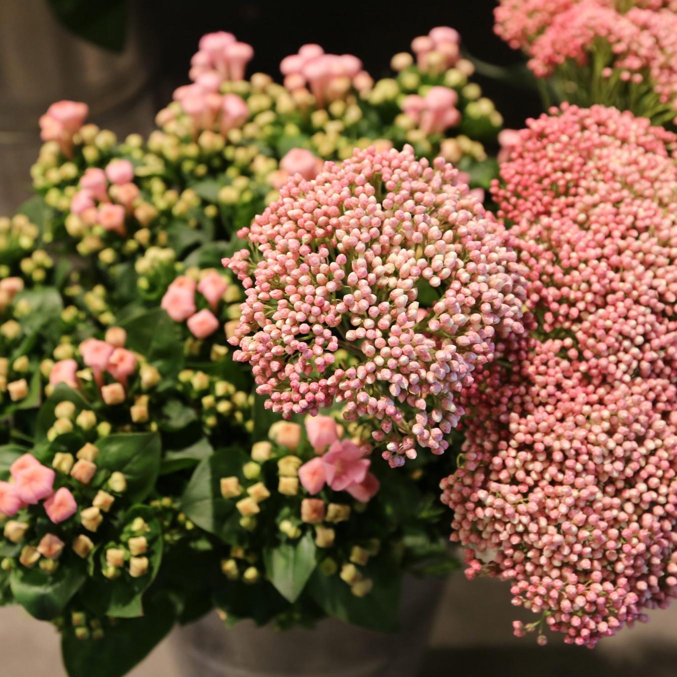 Snijbloemen | Vanallemeersch-Deraedt