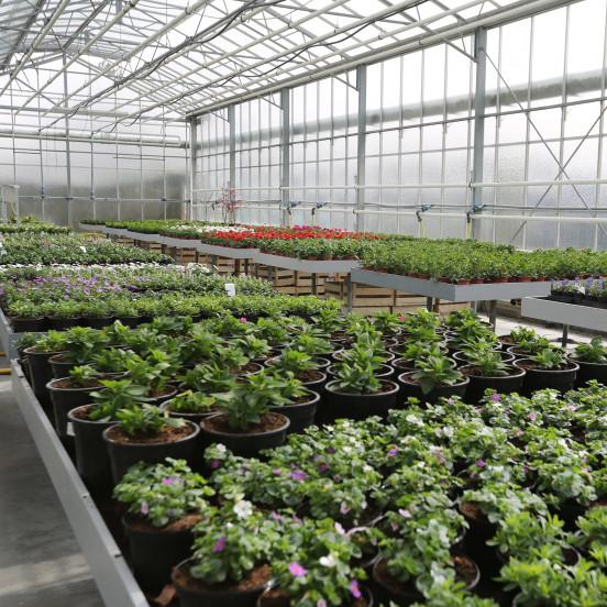 Perkplanten