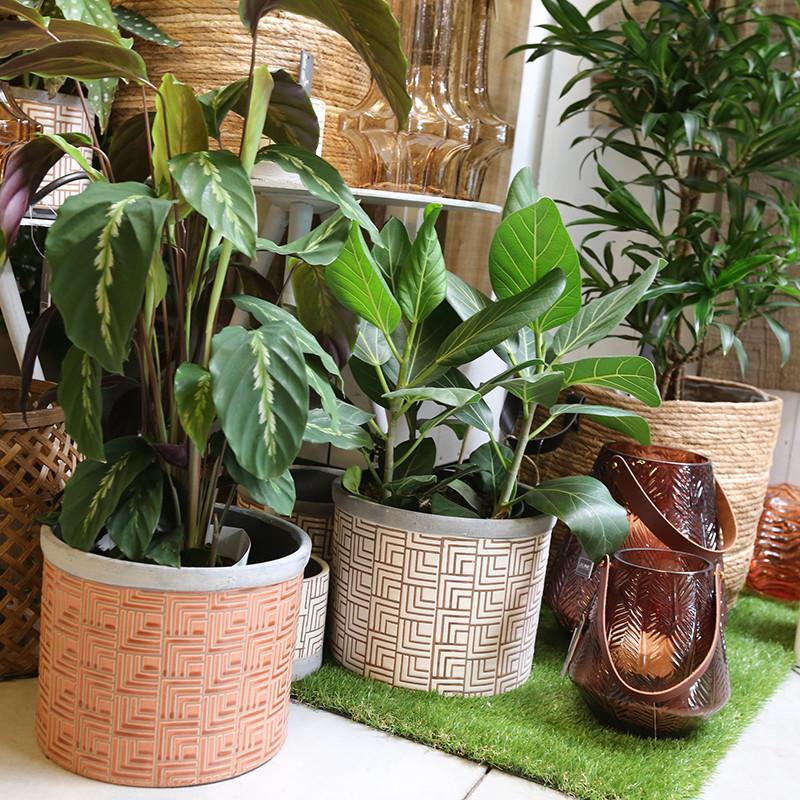 Planten Vanallemeersch-Deraedt