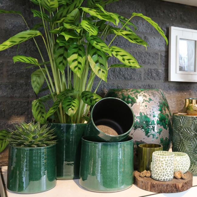 Planten Vanallemeersch-Deraedtt