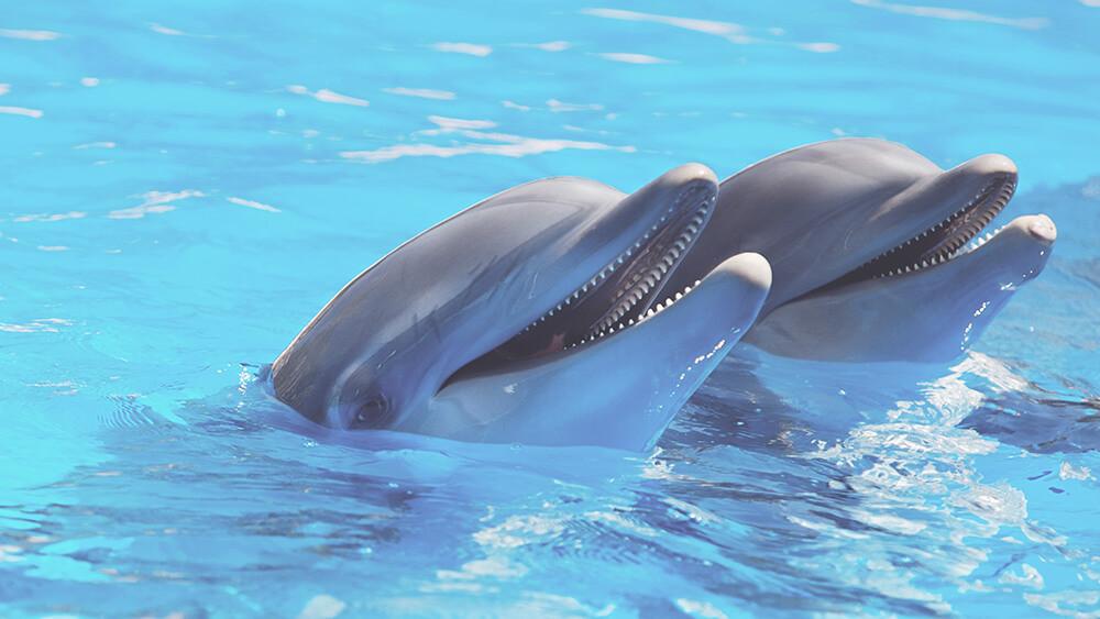 zeeparken-blog-mama-dolfijn.jpg
